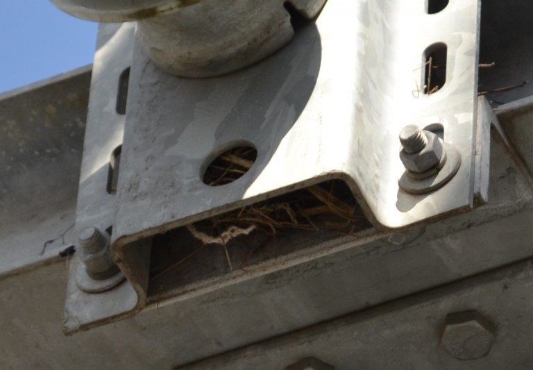 Bird's nest in substation
